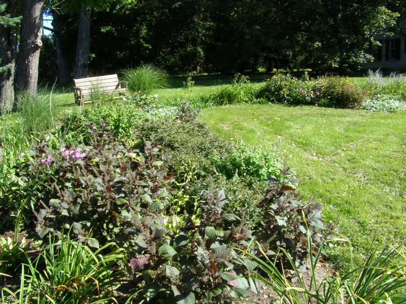 Perennial garden with bench